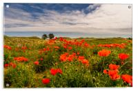 The Bamburgh Poppies, Acrylic Print