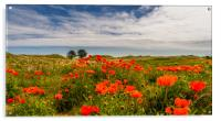 Poppies of Bamburgh, Acrylic Print