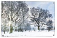 Snow covered forest with early morning sunrise, Acrylic Print