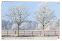 Two trees in a deep frozen winter, Acrylic Print