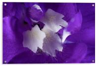 Beautiful Delphinium flower in high detail, Acrylic Print