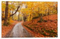 Autumn woodland and winding rural road, Acrylic Print