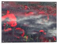 Poppies of Remembrance , Acrylic Print