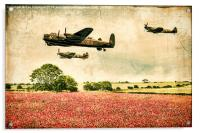 Battle of Britain Memorial Flight Over Poppies, Acrylic Print