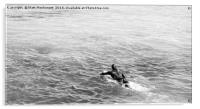 Paddling out, Fistral, Newquay, Acrylic Print
