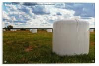 White Bales On The Field, Acrylic Print