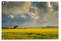 Dark clouds over a rape seed field, Acrylic Print