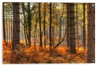 Pine Forest  in Autumn, Acrylic Print