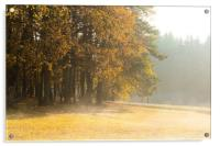 Morning at the edge of the forest. Fog and sunligh, Acrylic Print