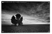 Scallop sculpture on the beach at Aldburgh, Acrylic Print