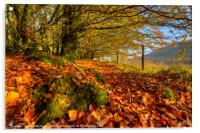 Autumn Colours in the Brecon Beacons, Acrylic Print