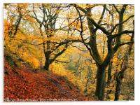late autumn beech forest colden valley, Acrylic Print