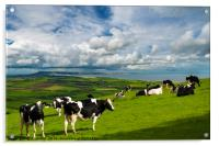 Cows in Dorset countryside overlooking Portland, Acrylic Print