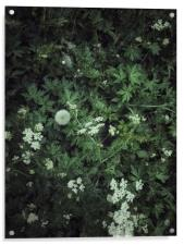 Abstract green grass background, Acrylic Print