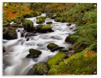 The River at Dolgoch Falls in the Autumn., Acrylic Print