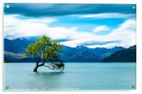 Lone Tree, Lake Wanaka, New Zealand, Acrylic Print