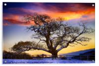 Snow covered Tree at Sunset, Acrylic Print