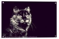 Image of very nice cat in black and white, Acrylic Print