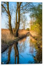 Wicken Fen scenic landscape in late evening light, Acrylic Print