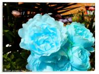 A bouquet of blue rose flowers, Acrylic Print