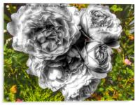 A black and white bouquet of pink rose flowers, Acrylic Print