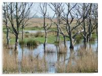 Hickling Nature Reserve , Acrylic Print