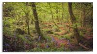 Bluebells at Kennall Vale, Acrylic Print