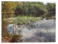Epping Forest reflections, Acrylic Print