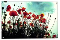 poppies in hot summer, Acrylic Print