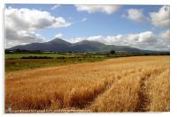 Harvest in the Mournes, Acrylic Print