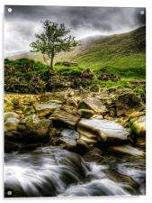 Lone Tree On River Etive, Acrylic Print