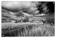 Reeds and Thatch at Hickling, Acrylic Print