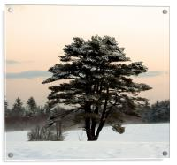 Cold Winter Morning in Maine, Acrylic Print