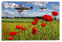 Spitfires and Poppy field, Acrylic Print