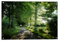 Sunlight through a remote country road lined with , Acrylic Print