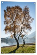 Sunlight through autumnal tree. Ullswater, Cumbria, Acrylic Print
