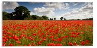 A Poppy or Two, Acrylic Print