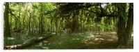 Whippendell Wood at Bluebell Time, Acrylic Print