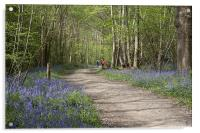 A Walk in the Bluebell Woods, Acrylic Print