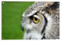 African spotted eagle owl, Acrylic Print