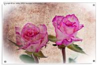 Pink Roses, Acrylic Print