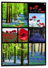 Poppies and Bluebells, Acrylic Print