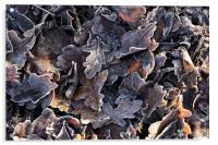 Frosted oak leaves, Acrylic Print