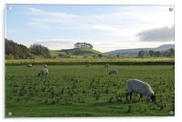 Sheep Grazing in Yorkshire, Acrylic Print
