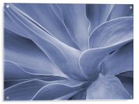 Agave in Blue, Acrylic Print