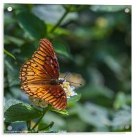 colourful orange butterfly, Acrylic Print