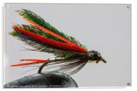Trout fishing fly, Acrylic Print