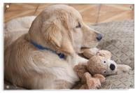 puppy with toy, Acrylic Print