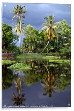 Palm Trees in a Storm Kerala, Acrylic Print