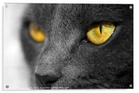 The Golden Eyes of a Cat, Acrylic Print